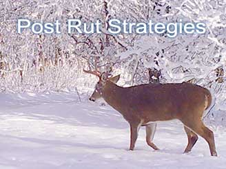 December Buck Strategies