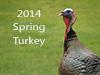 Spring Turkey 2014