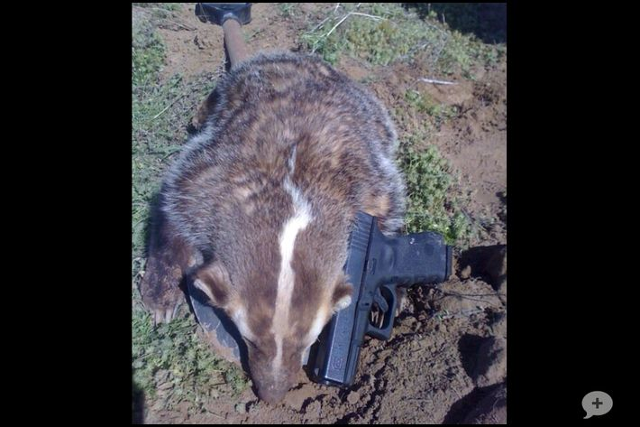 how to get rid of badgers