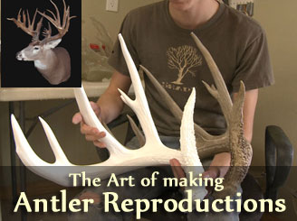 Antler Reproductions Artistic Antlers