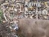 Deer Aging Contest