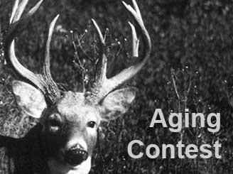 Deer Aging Contest 2016