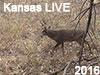 LIVE Kansas Bowhunt