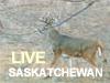Live Saskatchewan Bowhunt