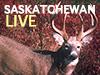 Saskatchewan Live Whitetail Hunt