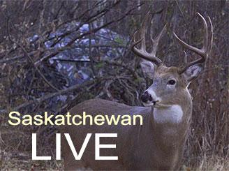 Saskatchewan Whitetails Live